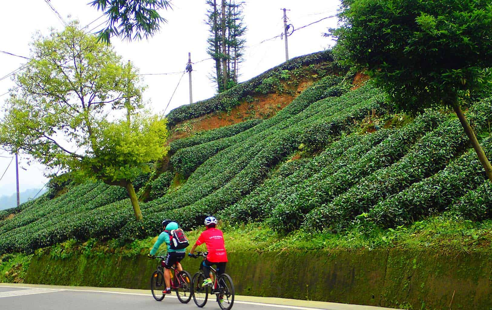 Biking to Pandas & Buddhas