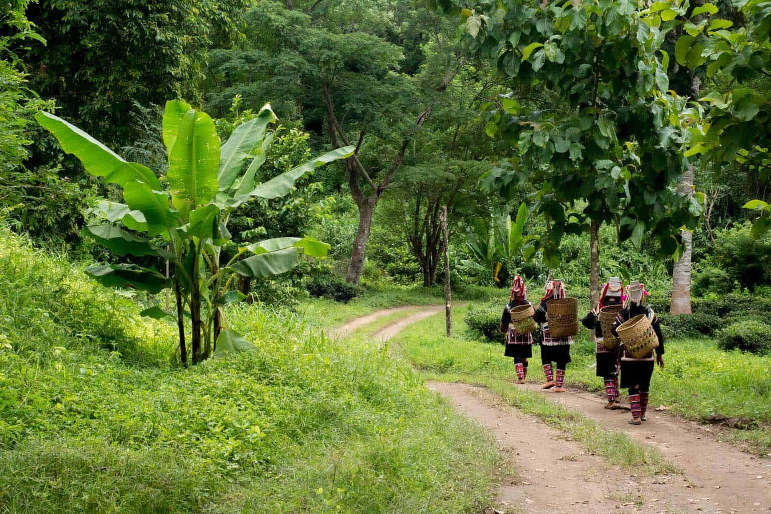 Lisu Lodge Trekking