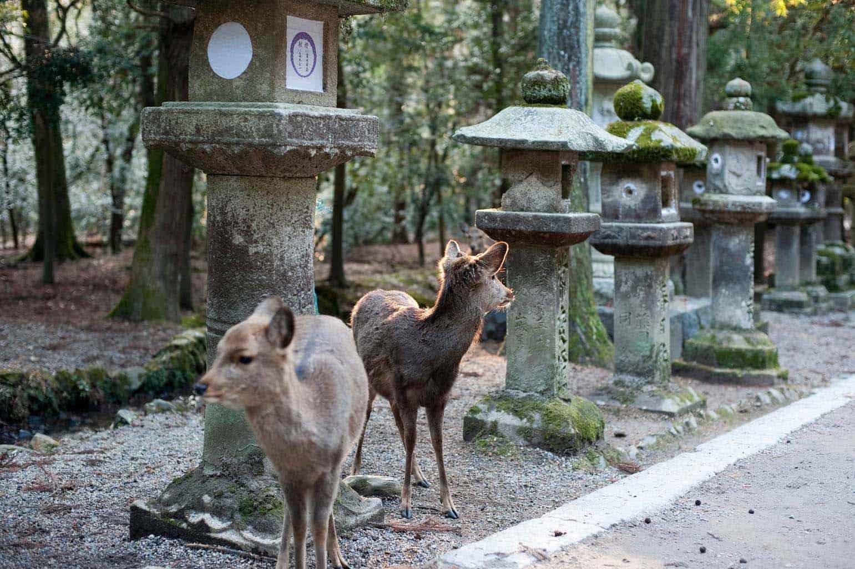 Discover Nara