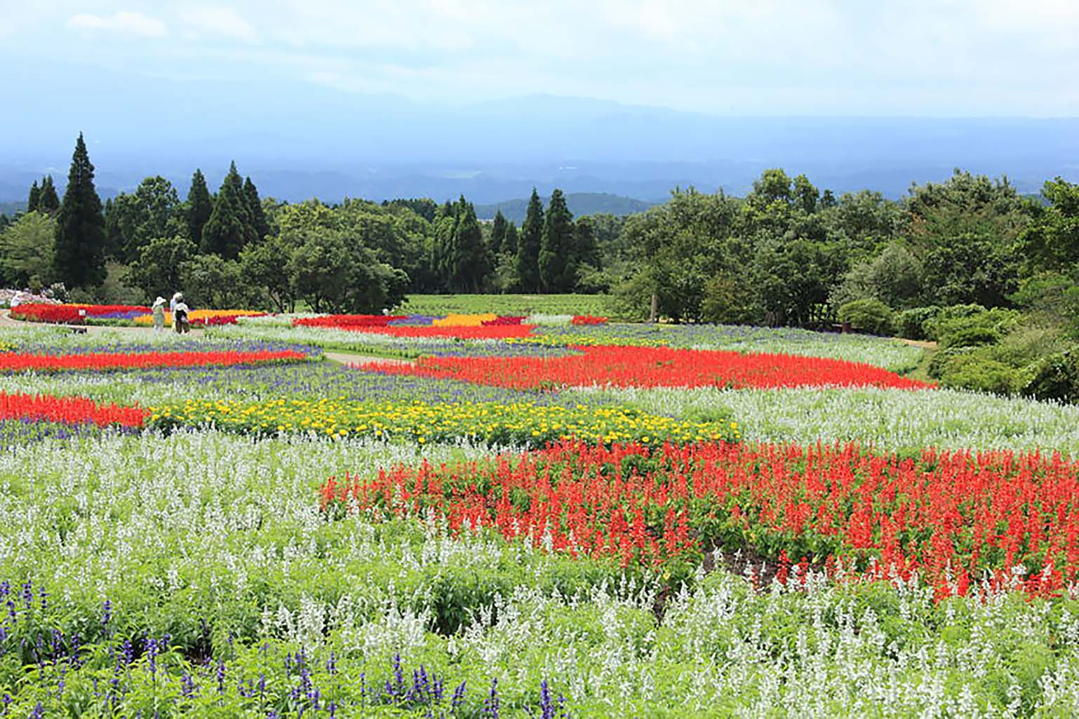 Mt Aso & Flower Park Tour