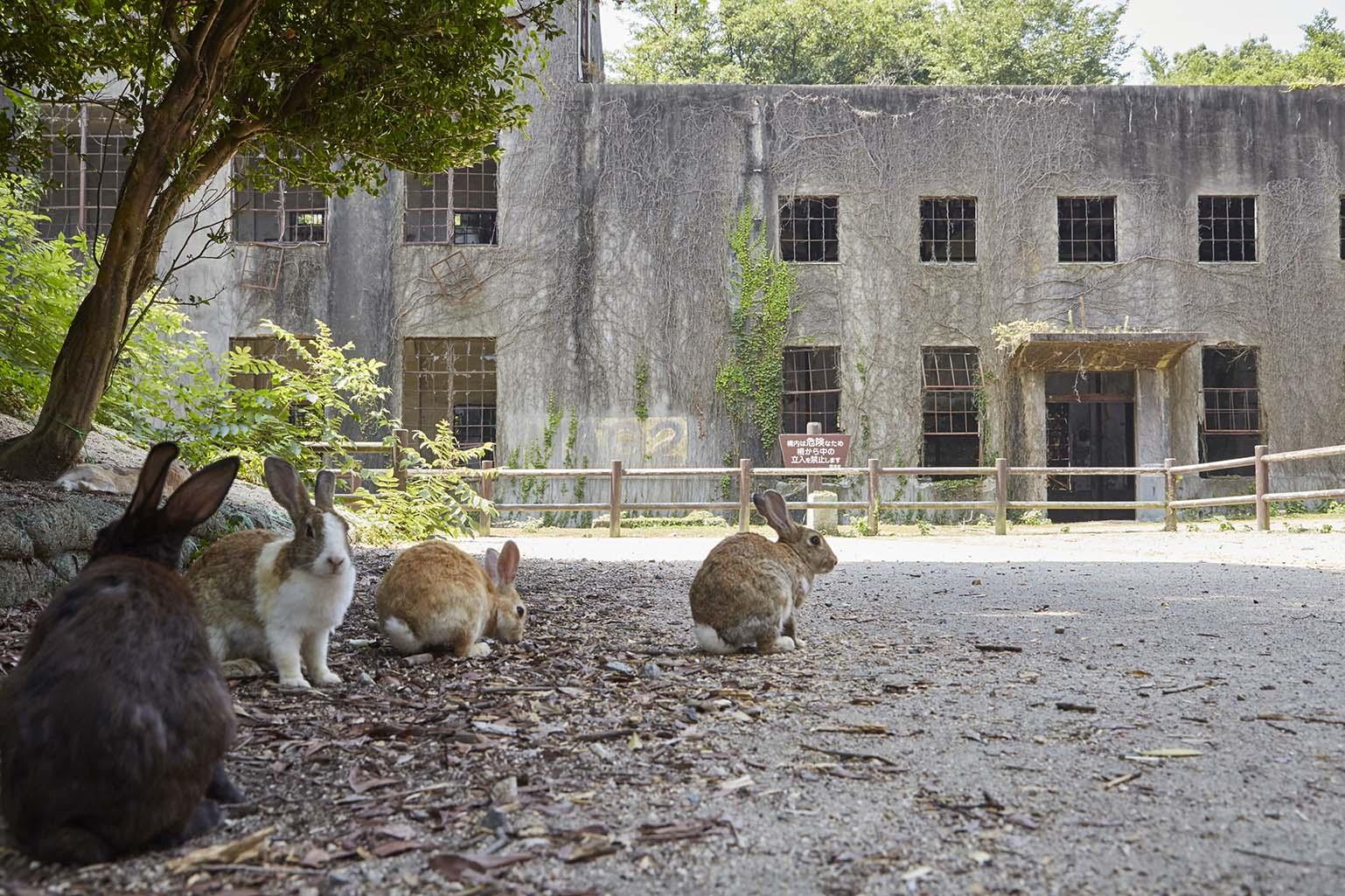 Rabbits & Sake