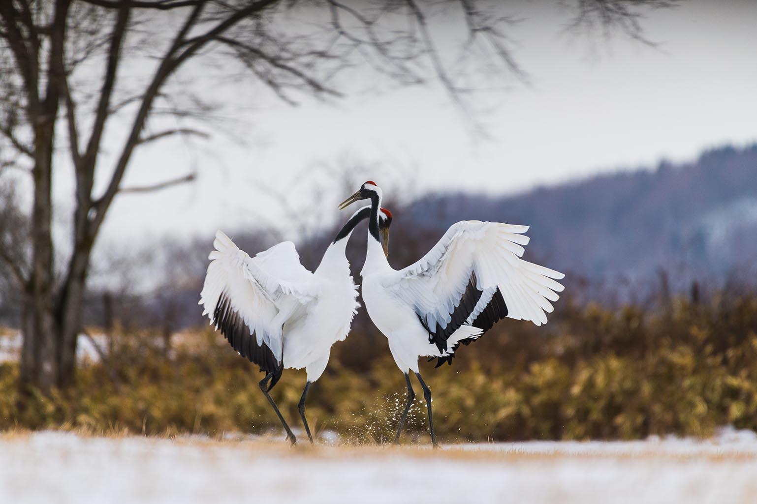 Eastern Hokkaido Wild Lands